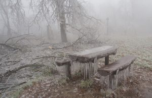 freezing_bench_3127248k