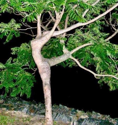 Il ne faut pas juger de l'arbre par l'écorce